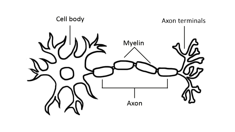 Drawing of Light-Up Neuron