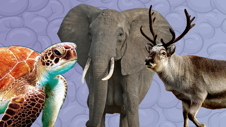 animals in research what can animals sense that we can t