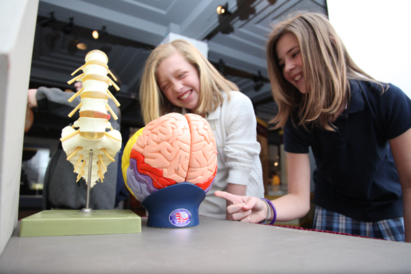 Students learn about the nervous system with a model of the brain and spinal cord at a Brain Awareness event.