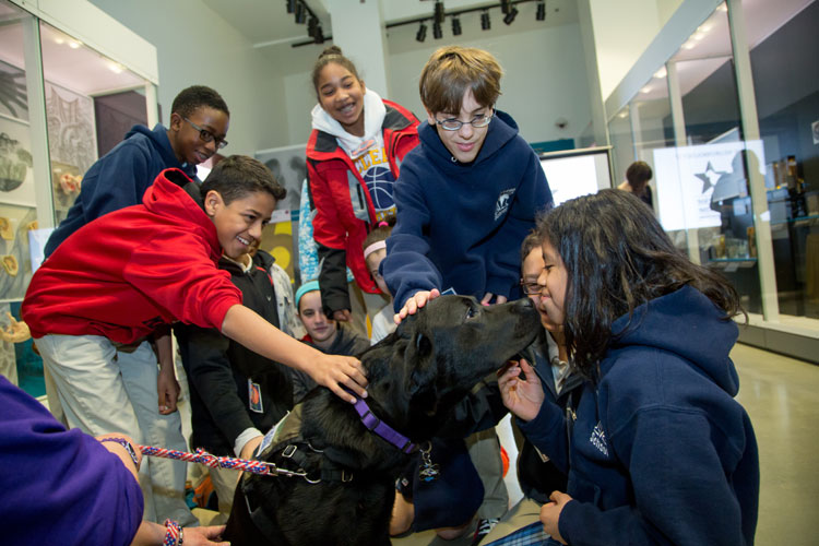 Students interact with a service dog at a 2014 Brain Awareness Event.