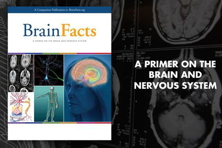 Download the Brain Facts book, a primer on the brain and nervous system.