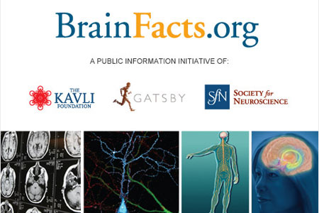 BrainFacts.org is an authoritative source of information about the brain and nervous system for the public.