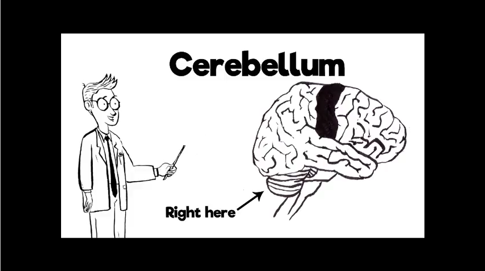 Without Your Cerebellum 082917