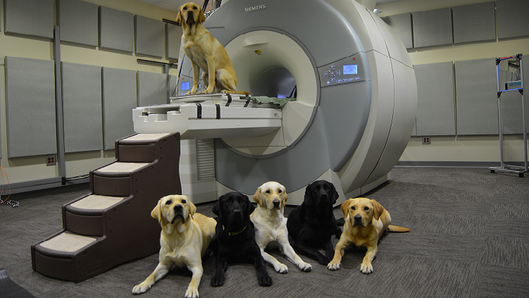 Photograph of dogs on top of and in front of a brain scanner