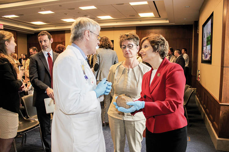 U.S. Rep. Suzanne Bonamici studies a brain during a neuroscience event on the Hill.