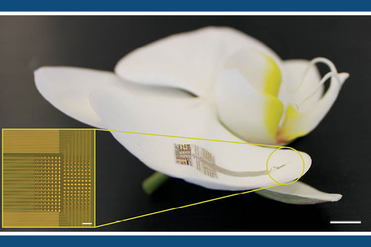NeuroGrid, the device is composed of tiny electrodes made from the polymer PEDOT:PSS