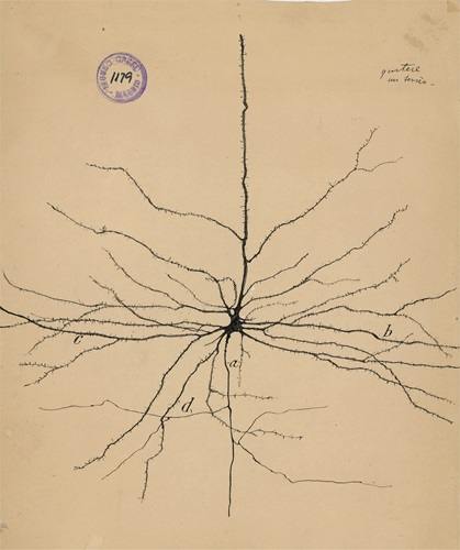 "Hand drawn image by Santiago Ramón Y Cajal of a pyramidal neuron of the cerebral cortex. (1913) Courtesy of the Cajal Institute, ""Cajal Legacy,"" Spanish National Research Council (CSIC), Madrid, Spain"