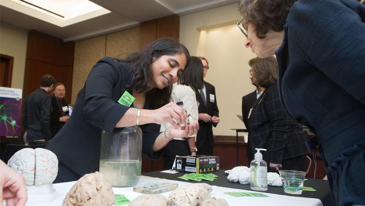 Person examining a brain at the 2018 SfN Brain Fair