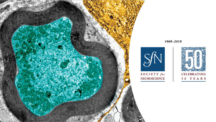 generic science image with SfN 50th anniversary logo