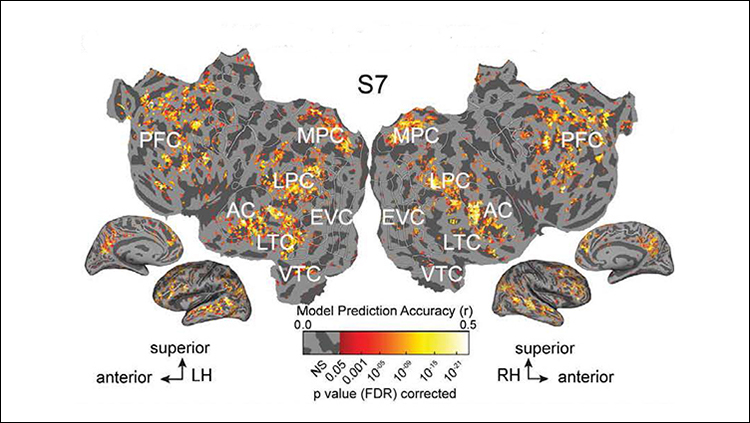 Nearly Identical Representations of Spoken, Written Words in the Brain
