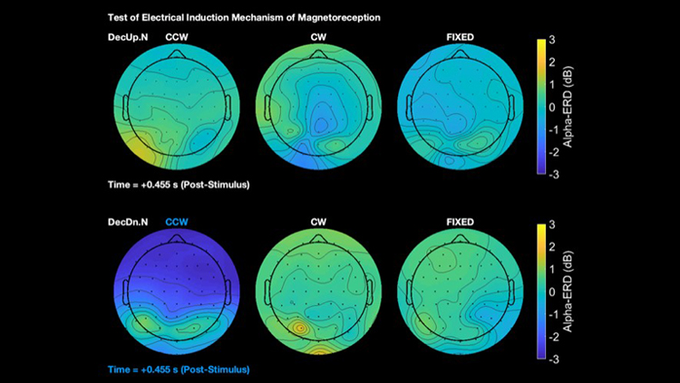 Evidence for Ancient Magnetic Sense in Humans