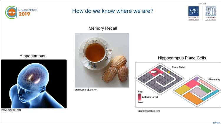 three images: one of the hippocampus highlighted, the next a cup of tea with biscuits, and and the last a diagram of a mouse maze.