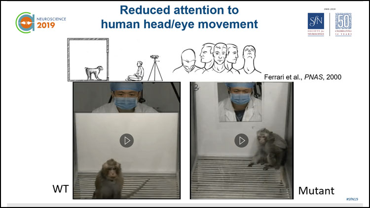 image of a mouse model showing the reduced attention to human head/eye movement.